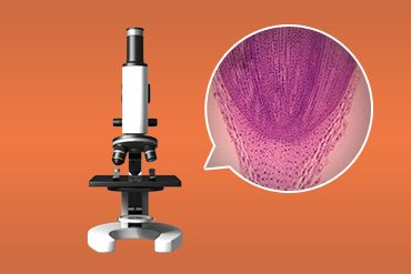观察洋葱根尖细胞分裂的永久装片
